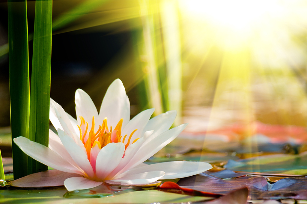 3abd6d70ff9a2 There is a flower in you - Lotus Flower PCOS